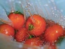 Πλένοντας φρέσκες ντομάτες Στοκ φωτογραφία με δικαίωμα ελεύθερης χρήσης
