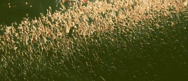 πλήθος συναυλίας Στοκ Εικόνα