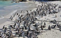 Πλήθος των αφρικανικών penguins Στοκ φωτογραφίες με δικαίωμα ελεύθερης χρήσης