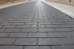 πλήκτρα που χάνονται Στοκ φωτογραφία με δικαίωμα ελεύθερης χρήσης