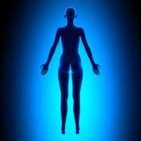 Πλήρες θηλυκό σώμα - πίσω άποψη - μπλε έννοια Στοκ εικόνες με δικαίωμα ελεύθερης χρήσης