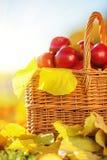 Πλήρες καλάθι των κόκκινων juicy οργανικών μήλων με τα κίτρινα φύλλα στο Au στοκ φωτογραφία