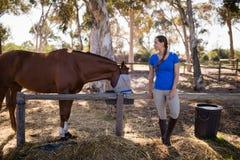 Πλήρες μήκος της γυναίκας που υπερασπίζεται το άλογο στοκ φωτογραφία με δικαίωμα ελεύθερης χρήσης