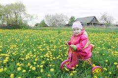 Πλήρες πορτρέτο μήκους του μικρού κοριτσιού που οδηγεί το ρόδινο και κίτρινο κύκλο πέρα από το ανθίζοντας λιβάδι πικραλίδων άνοιξ Στοκ εικόνα με δικαίωμα ελεύθερης χρήσης