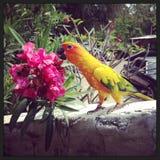 Πλήρες πουλί χρώματος στοκ φωτογραφίες με δικαίωμα ελεύθερης χρήσης