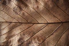 Πλήρες φύλλο φθινοπώρου πλαισίων καφετί στοκ φωτογραφία