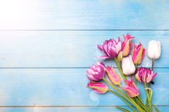 πλήρης άνοιξη λιβαδιών πικραλίδων ανασκόπησης κίτρινη Ποικιλία του φωτεινού ρόδινου λουλουδιού τουλιπών άνοιξη Στοκ εικόνα με δικαίωμα ελεύθερης χρήσης