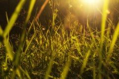 πλήρης άνοιξη λιβαδιών πικραλίδων ανασκόπησης κίτρινη Στοκ φωτογραφία με δικαίωμα ελεύθερης χρήσης