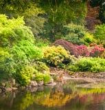πλήρης κήπος λουλουδιώ&n Στοκ Εικόνες