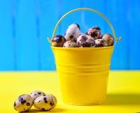 Πλήρης κίτρινος κάδος των αυγών ορτυκιών, Στοκ φωτογραφίες με δικαίωμα ελεύθερης χρήσης