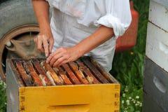 Πλαίσια επιθεώρησης μελισσοκόμων στην κυψέλη Στοκ Φωτογραφίες