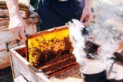Πλαίσια μιας κυψέλης μελισσών Μέλι συγκομιδής μελισσοκόμων Ο καπνιστής μελισσών Στοκ Φωτογραφία