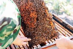Πλαίσια μιας κυψέλης μελισσών Μέλι συγκομιδής μελισσοκόμων Ο καπνιστής μελισσών Στοκ φωτογραφία με δικαίωμα ελεύθερης χρήσης