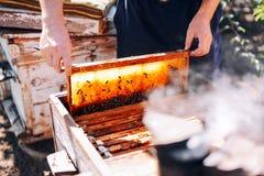 Πλαίσια μιας κυψέλης μελισσών Μέλι συγκομιδής μελισσοκόμων Ο καπνιστής μελισσών Στοκ Φωτογραφίες