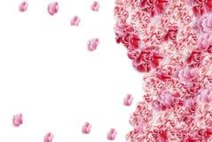 Πλαίσια λουλουδιών Στοκ φωτογραφία με δικαίωμα ελεύθερης χρήσης