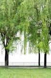 Πλαίσιο δέντρων. Στοκ Φωτογραφίες
