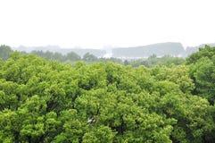 Πλαίσιο δέντρων. Στοκ Εικόνα
