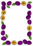 Πλαίσιο δαμάσκηνων στην άσπρη απεικόνιση φρούτων ελεύθερη απεικόνιση δικαιώματος