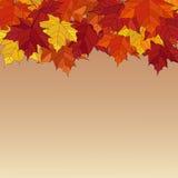Πλαίσιο από τα ζωηρά ζωηρόχρωμα φύλλα φθινοπώρου Στοκ Εικόνα