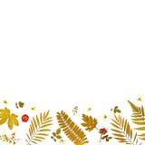 Πλαίσιο από τα κίτρινα φύλλα και τα ξηρά φύλλα και λουλούδι στο άσπρο υπόβαθρο Στοκ φωτογραφίες με δικαίωμα ελεύθερης χρήσης