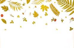 Πλαίσιο από τα κίτρινα φύλλα και τα ξηρά φύλλα και λουλούδι στο άσπρο υπόβαθρο Στοκ Εικόνα