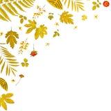Πλαίσιο από τα κίτρινα φύλλα και τα ξηρά φύλλα και λουλούδι στο άσπρο υπόβαθρο Στοκ εικόνες με δικαίωμα ελεύθερης χρήσης