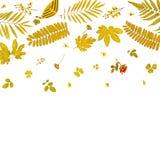 Πλαίσιο από τα κίτρινα φύλλα και τα ξηρά φύλλα και λουλούδι στο άσπρο υπόβαθρο Στοκ Φωτογραφία
