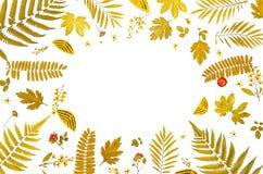 Πλαίσιο από τα κίτρινα φύλλα και τα ξηρά φύλλα και λουλούδι στο άσπρο υπόβαθρο Στοκ φωτογραφία με δικαίωμα ελεύθερης χρήσης