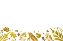 Πλαίσιο από τα κίτρινα φύλλα και τα ξηρά φύλλα και λουλούδι στο άσπρο υπόβαθρο Στοκ Εικόνες