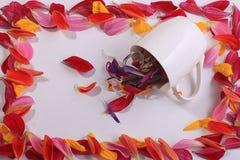 Πλαίσιο από τα κόκκινα πέταλα λουλουδιών Στοκ Εικόνες