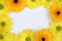 Πλαίσιο από τα λουλούδια χρυσάνθεμων την άνοιξη ή ημέρα μητέρων με Στοκ Φωτογραφίες