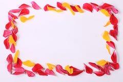 Πλαίσιο από τα πέταλα λουλουδιών Στοκ φωτογραφίες με δικαίωμα ελεύθερης χρήσης