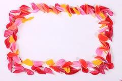 Πλαίσιο από τα πέταλα λουλουδιών Στοκ Εικόνα
