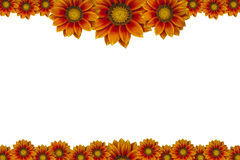 Πλαίσιο εικόνων λουλουδιών που απομονώνεται στο άσπρο υπόβαθρο Στοκ Εικόνες