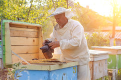 Πλαίσιο εκμετάλλευσης μελισσοκόμων της κηρήθρας με τις μέλισσες Στοκ φωτογραφία με δικαίωμα ελεύθερης χρήσης
