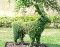 Πλαίσιο ελαφιών topiary Στοκ φωτογραφία με δικαίωμα ελεύθερης χρήσης