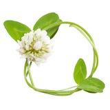 Πλαίσιο κύκλων από τα λουλούδια άνοιξη Στοκ Εικόνα