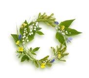 Πλαίσιο κύκλων από τα λουλούδια άνοιξη Στοκ Εικόνες