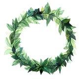 Πλαίσιο κύκλων στεφανιών Watercolor των καρυκευμάτων με τους πράσινους floral κλάδους στο άσπρο υπόβαθρο Στοκ Φωτογραφίες