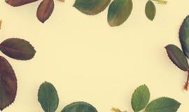Πλαίσιο με τα ροδαλά φύλλα που απομονώνεται στο άσπρο υπόβαθρο Στοκ Φωτογραφία