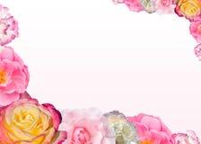 Πλαίσιο με τα τριαντάφυλλα για τις κάρτες διακοπών Στοκ Φωτογραφίες