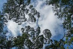 Πλαίσιο με τα φύλλα και τον ουρανό Στοκ Εικόνες