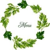 Πλαίσιο με τα φύλλα του μαϊντανού Στοκ εικόνα με δικαίωμα ελεύθερης χρήσης