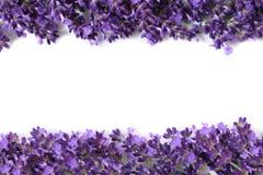 Πλαίσιο με lavender Στοκ Φωτογραφία