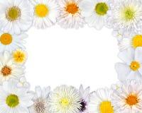 Πλαίσιο λουλουδιών με τα άσπρα λουλούδια στο κενό υπόβαθρο Στοκ Φωτογραφίες