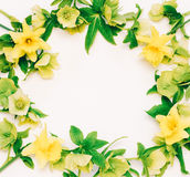 Πλαίσιο λουλουδιών με το διάστημα για το κείμενο από τους ναρκίσσους λουλουδιών και hellebore στο λευκό Στοκ φωτογραφίες με δικαίωμα ελεύθερης χρήσης
