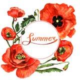 Πλαίσιο λουλουδιών παπαρουνών Wildflower σε ένα ύφος watercolor που απομονώνεται Στοκ εικόνα με δικαίωμα ελεύθερης χρήσης