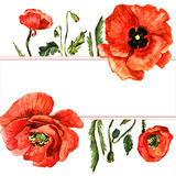 Πλαίσιο λουλουδιών παπαρουνών Wildflower σε ένα ύφος watercolor που απομονώνεται Στοκ φωτογραφία με δικαίωμα ελεύθερης χρήσης