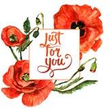 Πλαίσιο λουλουδιών παπαρουνών Wildflower σε ένα ύφος watercolor που απομονώνεται Στοκ Φωτογραφίες