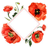 Πλαίσιο λουλουδιών παπαρουνών Wildflower σε ένα ύφος watercolor που απομονώνεται Στοκ φωτογραφίες με δικαίωμα ελεύθερης χρήσης